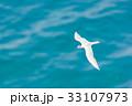 海 海鳥 飛ぶの写真 33107973