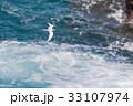 海 海鳥 飛ぶの写真 33107974