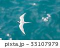 海 海鳥 飛ぶの写真 33107979