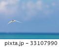 海 海鳥 飛ぶの写真 33107990