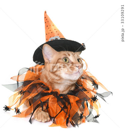 ginger cat and halloween 33109291
