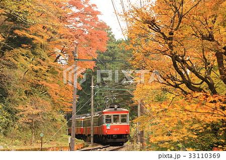 紅葉の箱根登山鉄道 33110369