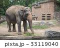 象 天王寺動物園 アジアゾウの写真 33119040
