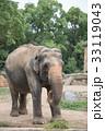 象 天王寺動物園 アジアゾウの写真 33119043