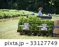 女性 農業女子 農作業の写真 33127749