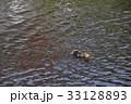 鴨 泳ぐ 池の写真 33128893