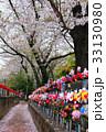 満期の桜の下で回る風くるま 33130980