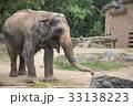 象 天王寺動物園 アジアゾウの写真 33138223