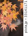 紅葉 もみじ 葉っぱの写真 33141171