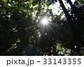 木漏れ日 33143355