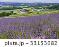 富良野・花人街道の花畑 33153682