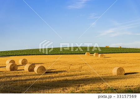 丘の町・美瑛の田園風景 33157569