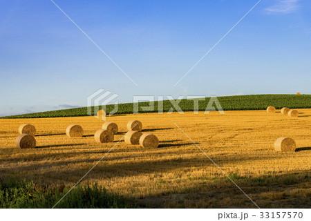 丘の町・美瑛の田園風景 33157570