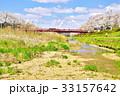 夏井川 満開 桜並木の写真 33157642