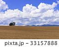 畑 麦畑 風景の写真 33157888