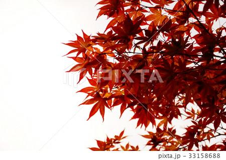 京都の紅葉 33158688
