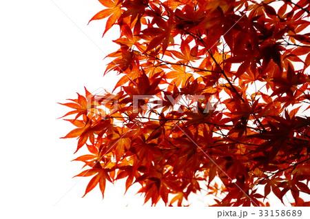 京都の紅葉 33158689