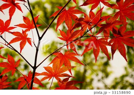 京都の紅葉 33158690