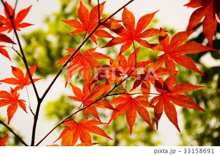 京都の紅葉 33158691