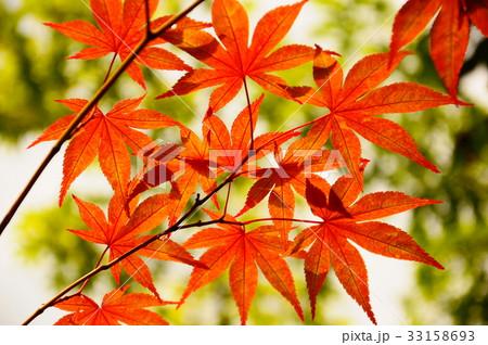 京都の紅葉 33158693