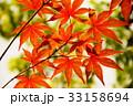 京都の紅葉 33158694