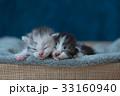 動物 ねこ ネコの写真 33160940