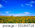柳川ひまわり園 33164718