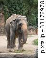 象 天王寺動物園 アジアゾウの写真 33176978