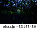 螢火蟲 33188439