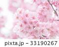 河津桜 33190267