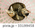 two cute adorable Cats sister cuddle lying basket. 33199458