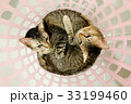 two cute adorable Cats sister cuddle lying basket. 33199460