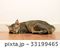 Cat sleeping on wooden floor with white blank wall 33199465