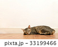 Cat sleeping on wooden floor with white blank wall 33199466