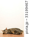 Cat sleeping on wooden floor with white blank wall 33199467