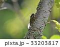 【夏の風景】セミが木にとまって鳴く 33203817