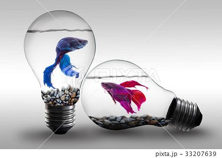 Fish in water inside an electric light bulb の写真素材 [33207639] - PIXTA
