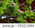 花 山査子 紅花サンザシの写真 33221364
