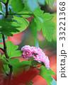 花 山査子 紅花サンザシの写真 33221368