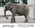 アジアゾウのナナ(帯広動物園) 33221546