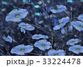 Blue flowers on blurry blue background.  33224478