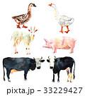 牛 水彩画 ぶたのイラスト 33229427