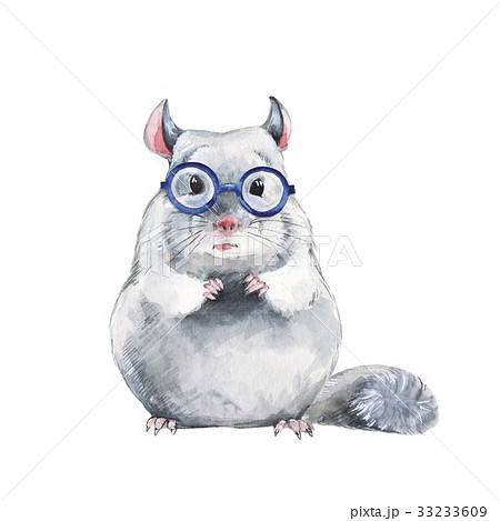 Chinchilla in glasses 33233609
