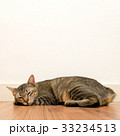 Cat sleeping on wooden floor with white blank wall 33234513