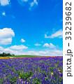 青空 ラベンダー 花畑の写真 33239682