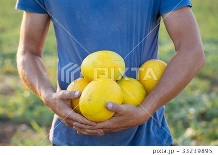 Farmer holding fresh melon crop on the field at organic eco farm. 33239895