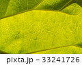 Abstract leaf texture for background 33241726
