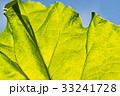 Abstract leaf texture and blue sky 33241728
