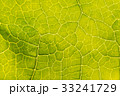 Abstract leaf texture for background 33241729