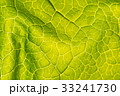 Abstract leaf texture for background 33241730